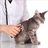 Ветеринарные клиники в Ермише